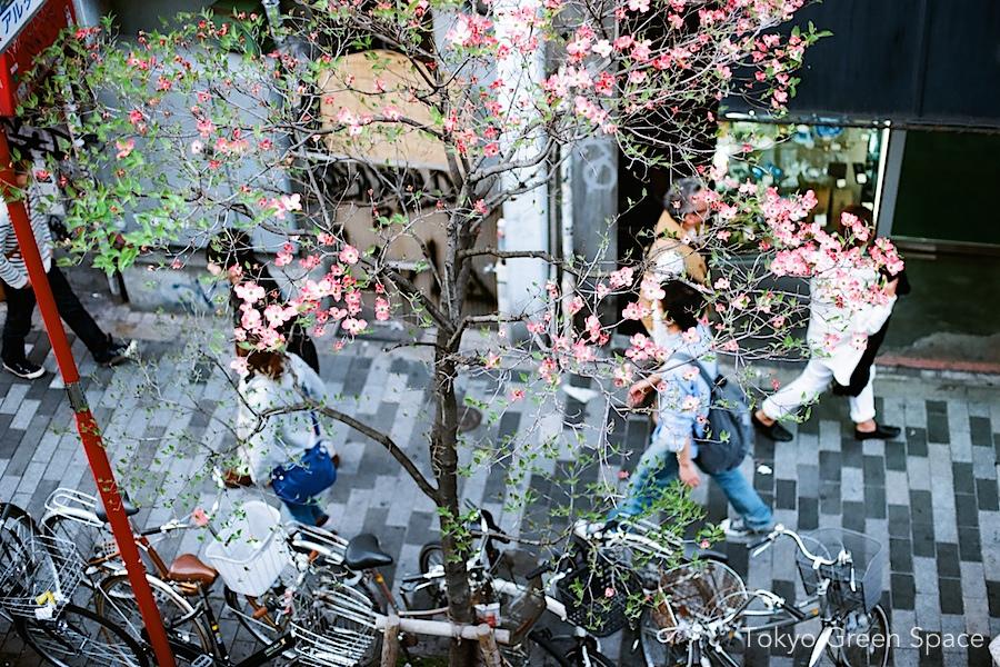 dogwood_sidewalk_shinjuku_bikes