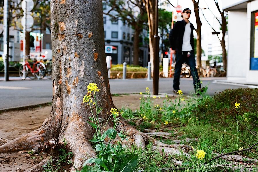 nanohana_flower_sidewalk_nichome_shinjuku