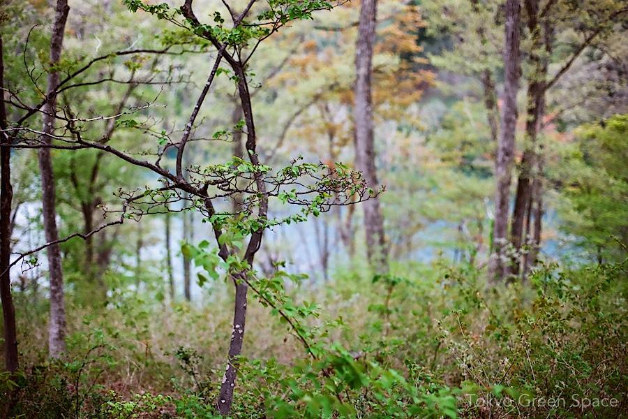 forest_nojiriko_nagano