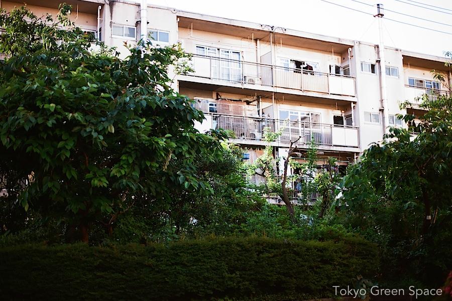 aoyama_danchi_early_summer