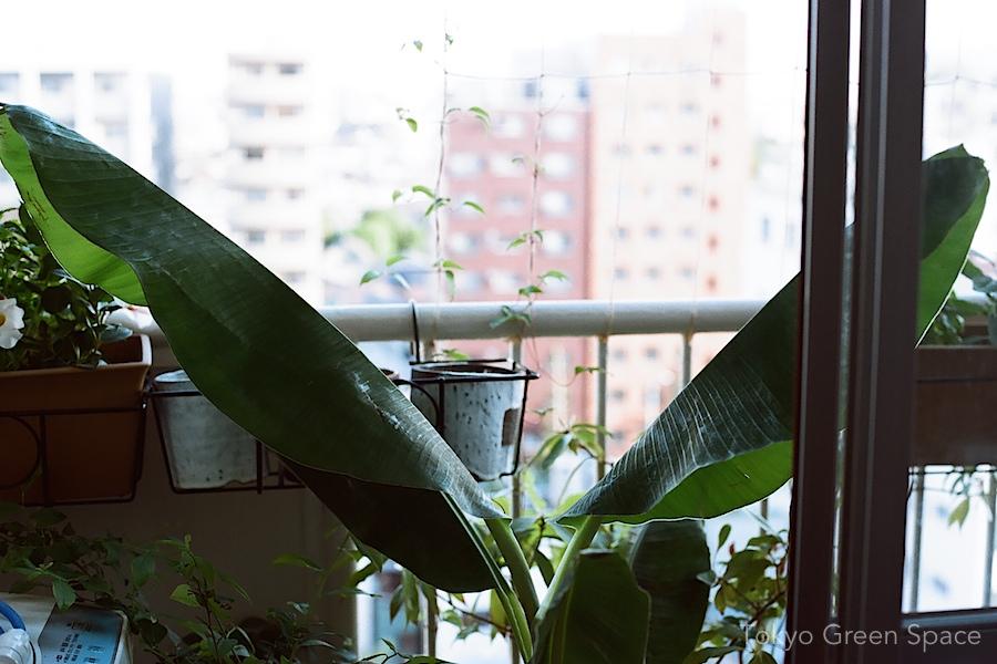 banana_tokyo_balcony