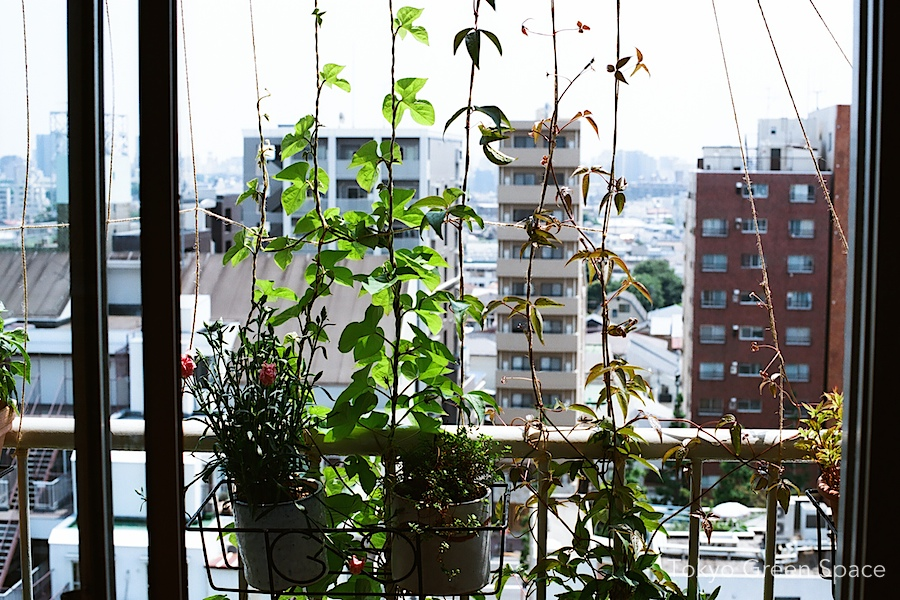 green_curtain_early_summer