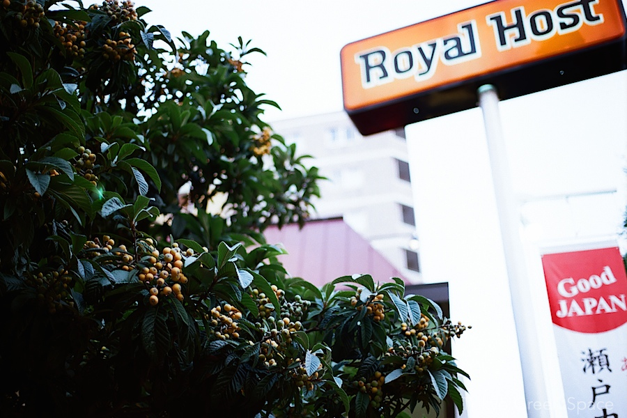 loquat_tree_royal_host_nakano