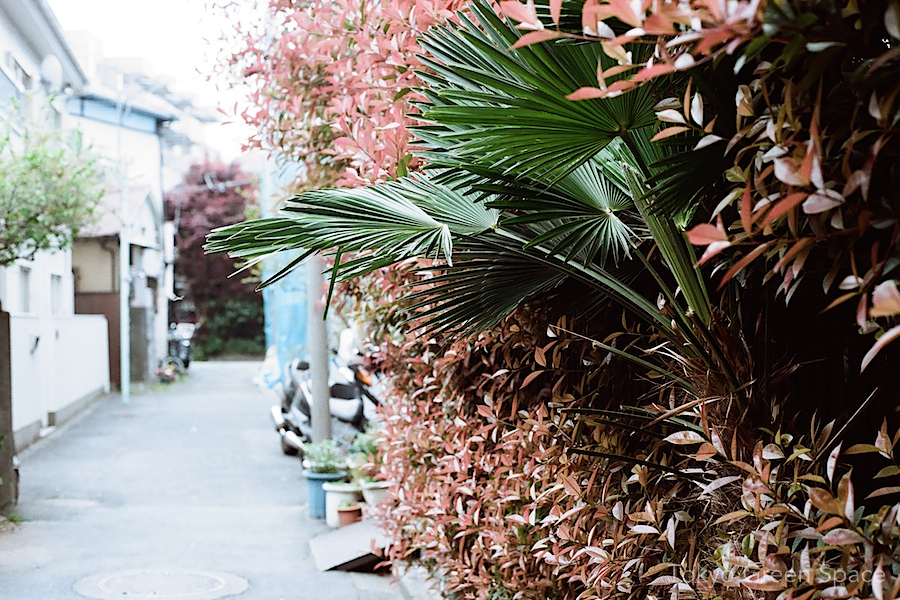 shuro_palm_nakano_backstreet_kanamemochi