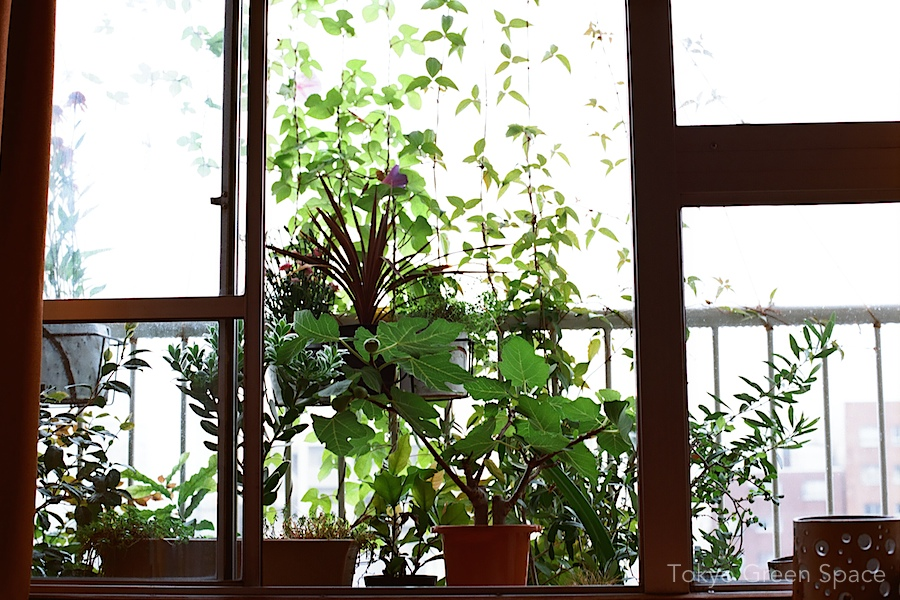 balcony_livingroom_earlyJuly