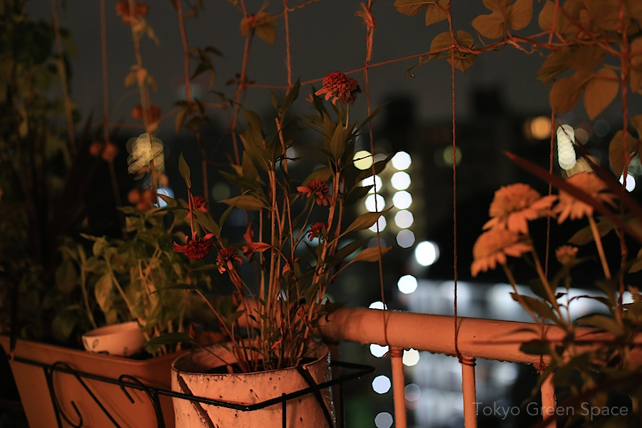 balcony_summer_night