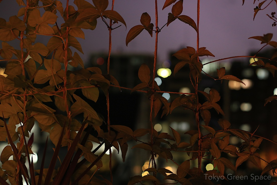 green_curtain_balcony_summer_night