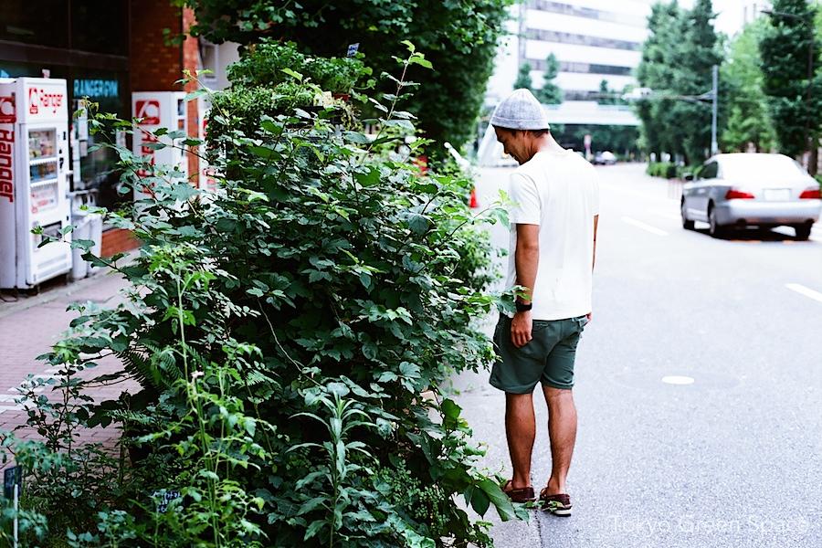 shige_florishiroko_sidewalk_garden
