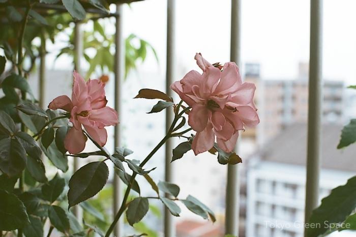 lespoir_rose_balcony_nakano