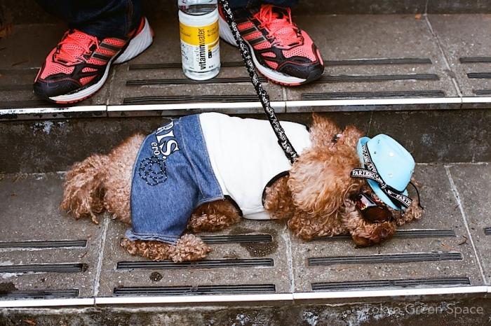 western_dog_yoyogi_park