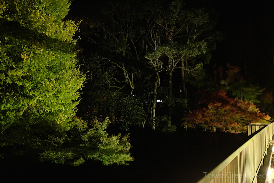 shadow_fall_night_bridge2_izu