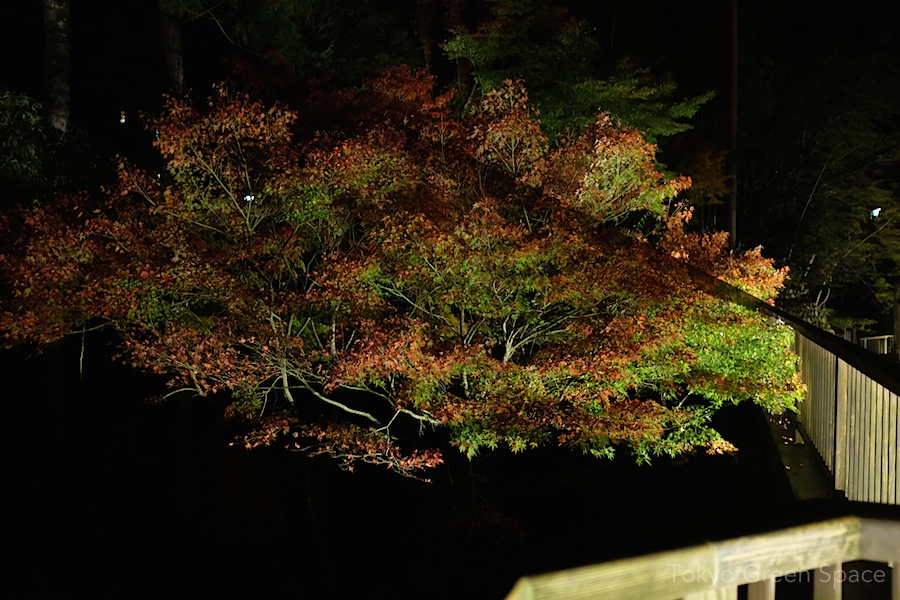 shadow_fall_night_bridge_izu