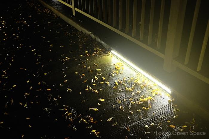 wood_leaves_night_bridge_izu