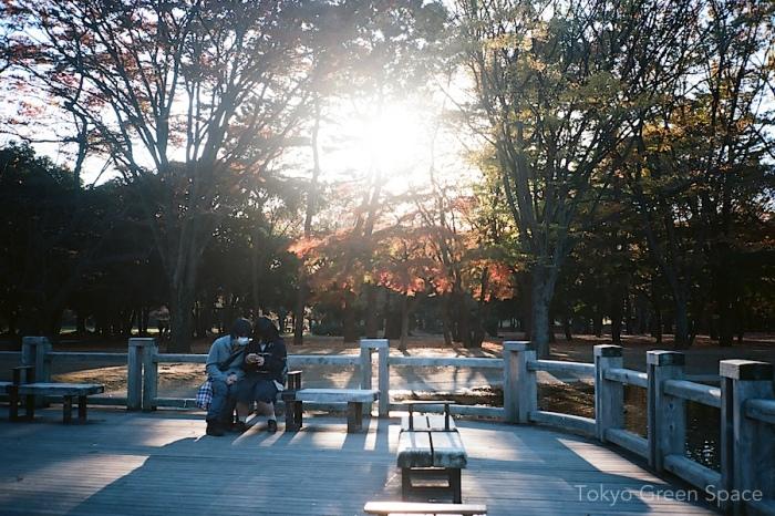 digital_attention_fall_yoyogi_park