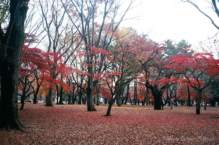 red_leaves_yoyogi_park