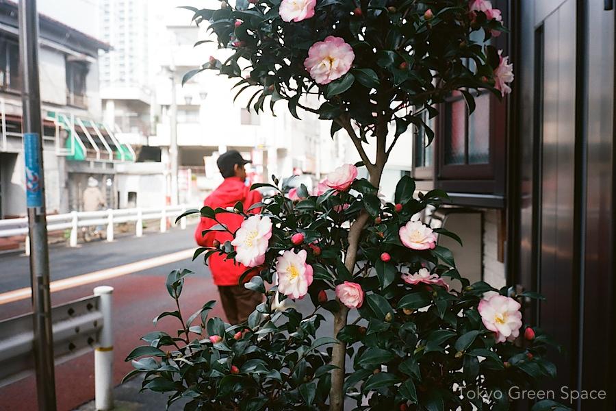 sidewalk_camelia_nakano_double_pink