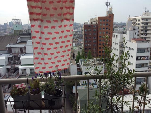 pig_tenegui_tokyo_balcony_garden