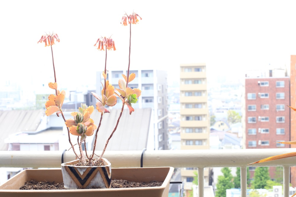 succulent_ceramic_balcony_april2015