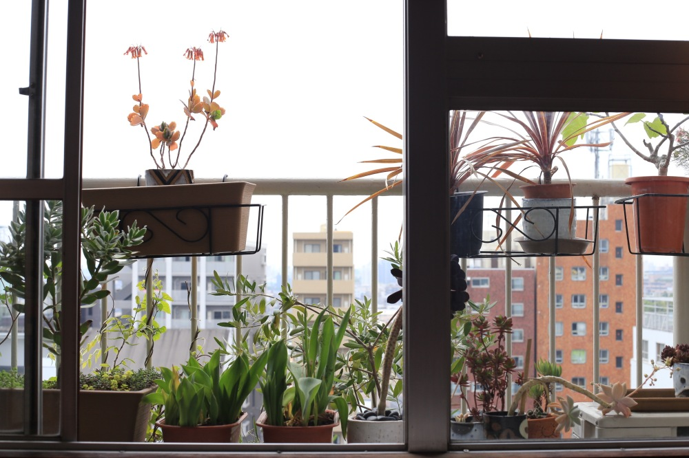 succulents_balcony_april_2015